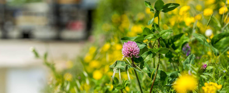 Umwelt Renaturierung Rekultivierung Blume Schotterwerk Mayer